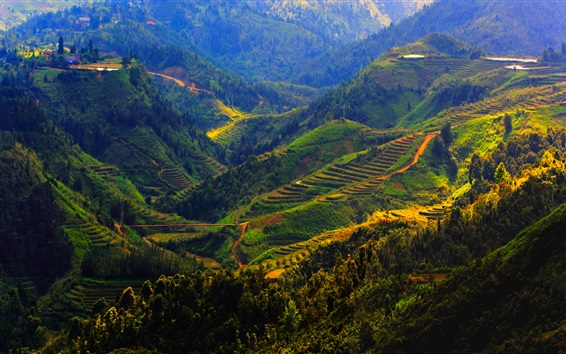 Fond d'écran Vietnam, Sapa, montagnes, Arbres, Champs
