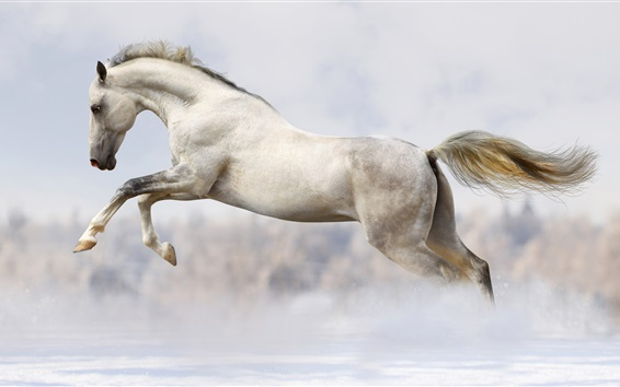 Wallpaper White horse fast run