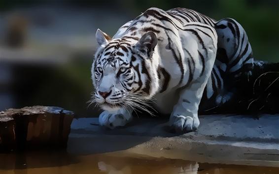 Fond d'écran Tigre blanc, peinture d'art