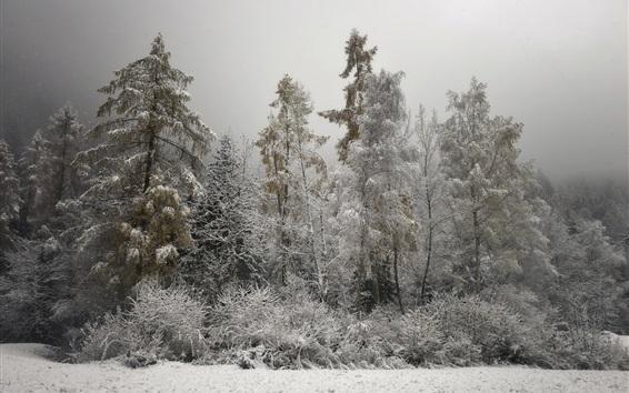 Обои Зима, холод, деревья, снег, сумерки