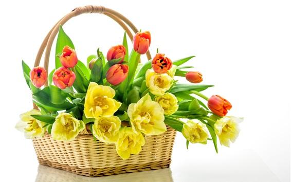 Обои Желтые и красные тюльпаны, корзина, белый фон