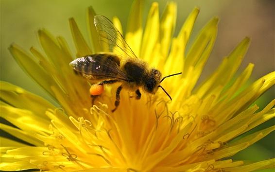 Papéis de Parede Amarela, flor, pétalas, abelha, pistil