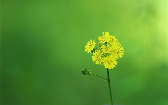 Papéis de Parede Amarelo flores pouco, inflorescência, tronco, fundo verde