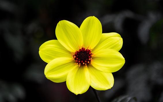 Wallpaper Yellow petals flower macro photography, pistil, bokeh