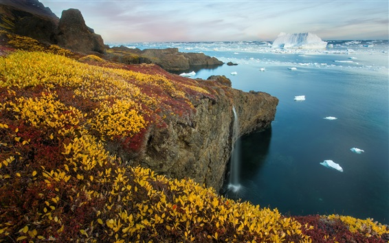 Wallpaper Arctic Eden, sea, coast, ice, plants