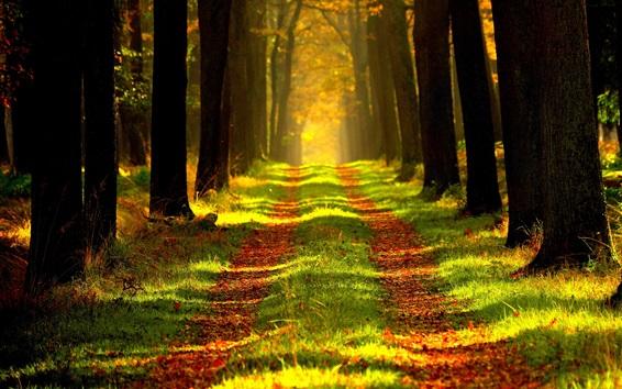 Fond d'écran Forêt d'automne, chemin, herbe, rayons du soleil