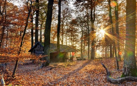Wallpaper Autumn, forest, sun rays, hut