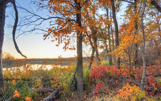 Обои Осень, дерево, красные листья, река