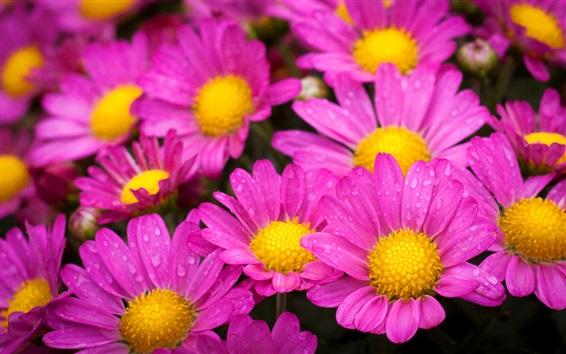 Papéis de Parede Lindas flores rosa, pétalas, gotas de água