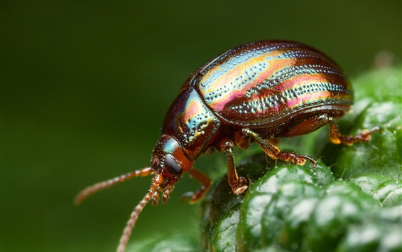 Обои Жук, фотография насекомых
