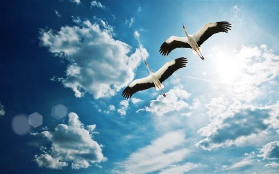 Обои Птица два крана летать в небе, облака