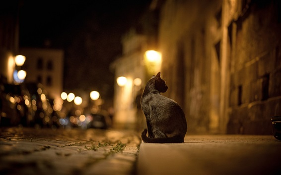 Wallpaper Black cat at street night