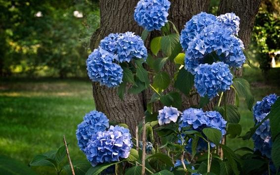 Обои Синие сиреневые цветы