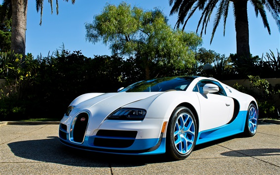 Wallpaper Bugatti Veyron supercar, white and blue, palm trees