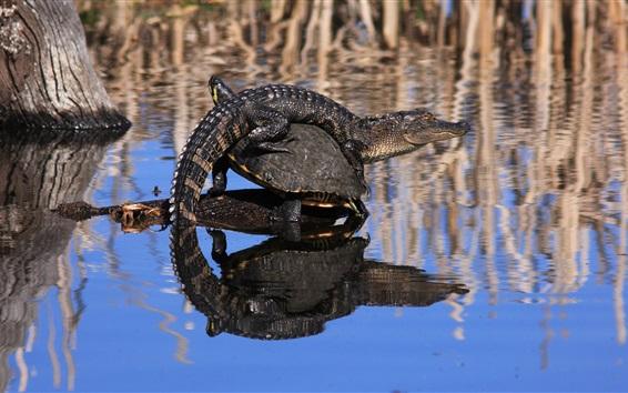 Обои Крокодил и черепаха