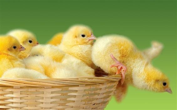 Wallpaper Cute chicks in basket