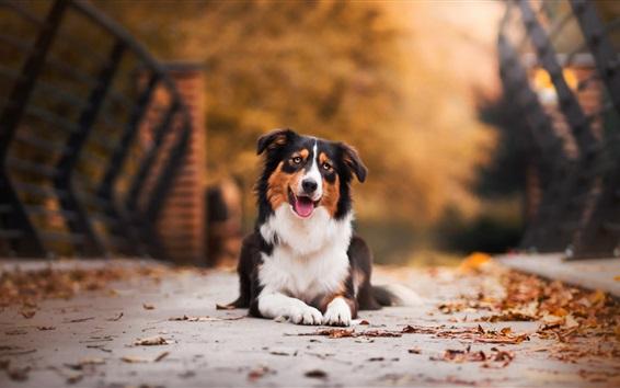 Обои Симпатичная собака сидит на земле, листья, осень