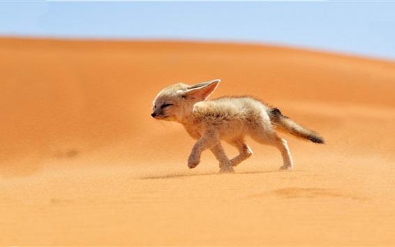Обои Милая лиса гуляют в пустыне