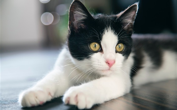 Wallpaper Cute kitten, white and black, yellow eyes