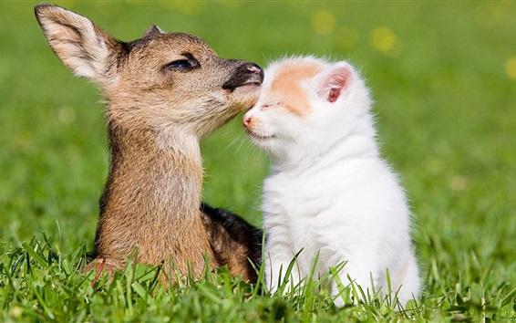 Fondos de pantalla Ciervo y gatito, amigos, hierba