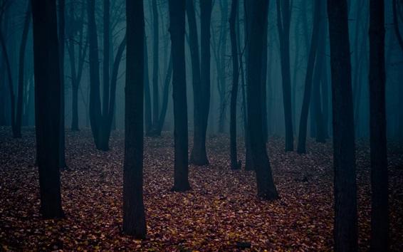 Wallpaper Dusk, forest, trees, fog, leaves
