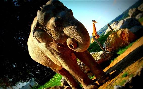 Papéis de Parede Elefante e girafa, jardim zoológico