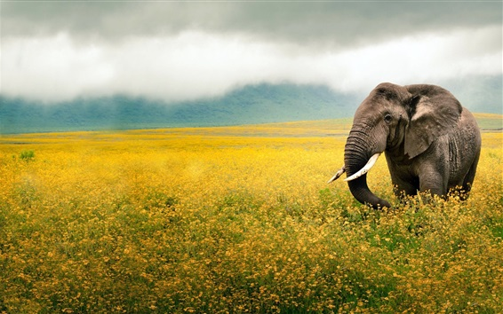 Wallpaper Elephant walk in the flowers