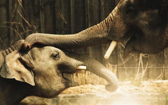 Wallpaper Elephants love touch