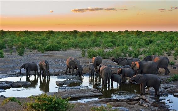 배경 화면 코끼리 갈증, 물 마시기