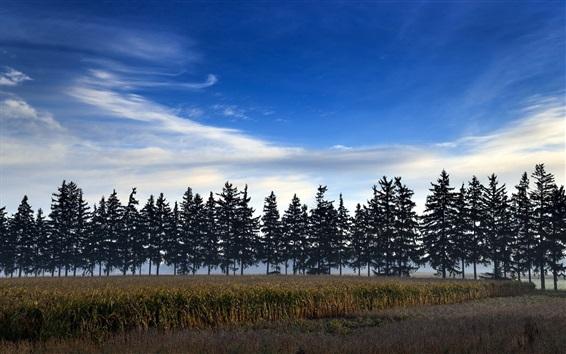 Fond d'écran Champs, arbres, crépuscule