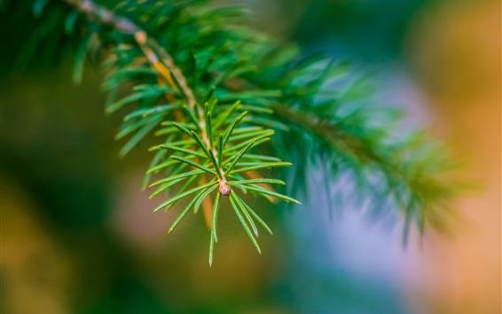 Fond d'écran Fir branch close-up, bokeh