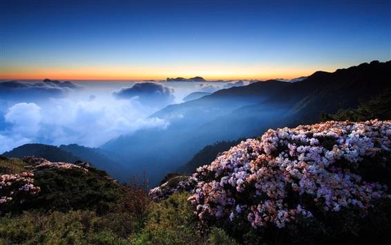 Wallpaper Flowers, mountains, clouds, summer