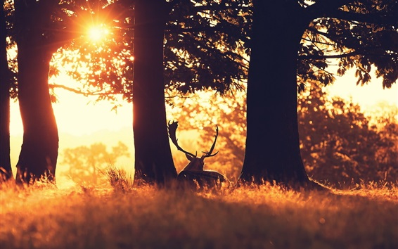 Wallpaper Forest, deer, trees, grass, sunshine