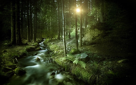 Wallpaper Forest, stream, sun