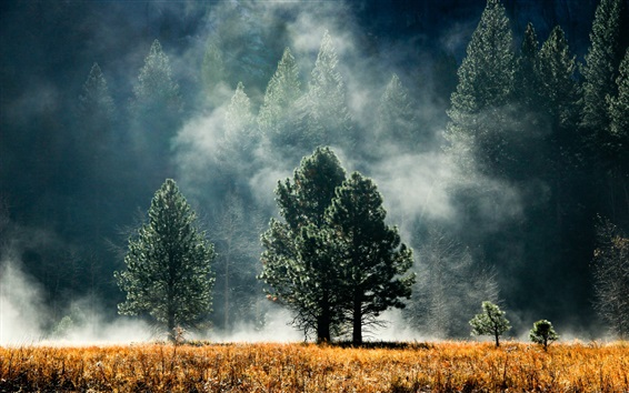 Papéis de Parede Floresta, árvores, capim, nevoeiro, amanhecer