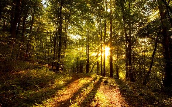 Fondos de pantalla Bosque, árboles, sol, resplandor