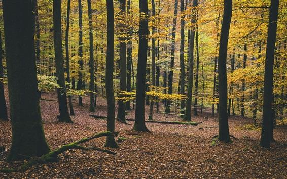 Wallpaper Forest, trees, yellow foliage, autumn