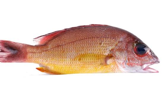 Wallpaper Fresh fish, white background