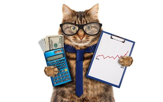 壁紙 面白い動物、猫、眼鏡、ネクタイ、電卓、お金、会計士