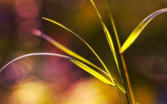 Fond d'écran Herbe close-up, éblouissement
