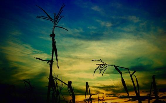 壁紙 草、夕方、夕暮れ