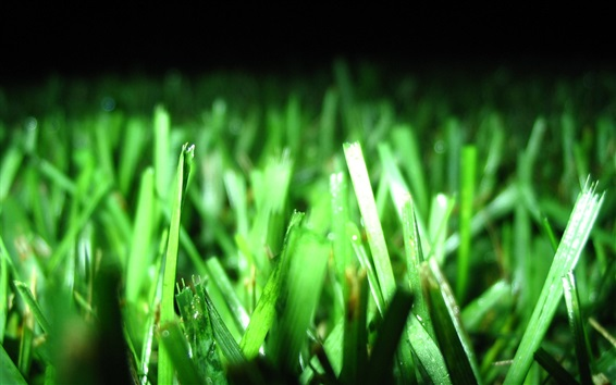 Wallpaper Grass, green leaves, plant photography