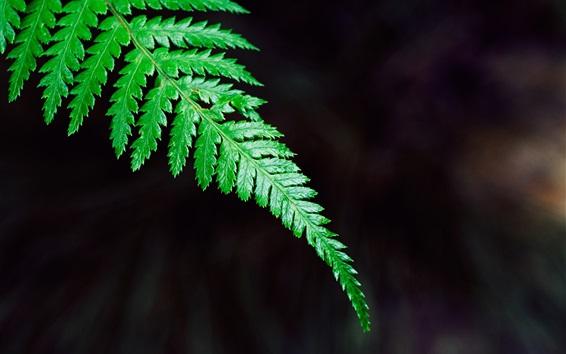 Papéis de Parede Verde, fern, folha, close-up