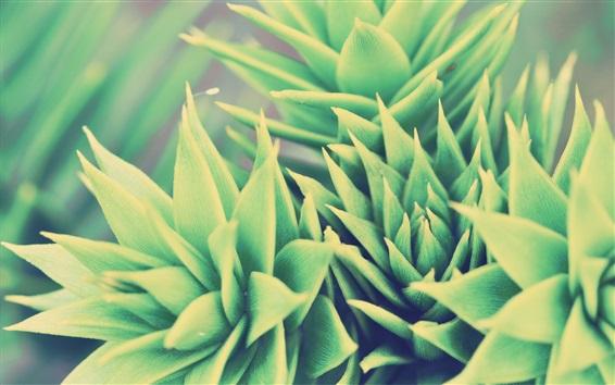 Papéis de Parede Plantas verdes, houseplant, folha