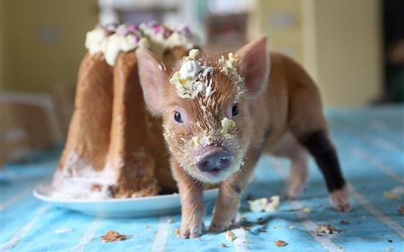 Papéis de Parede Animais domésticos, porco, creme