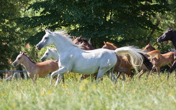 Wallpaper Horses, run, grass