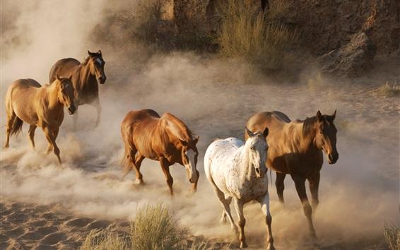 Обои Лошади бегут, пыль