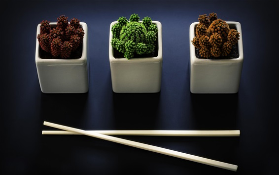 Wallpaper Houseplant, cactus, chopsticks