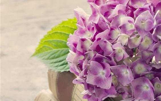 Wallpaper Hydrangea, pink flowers, book