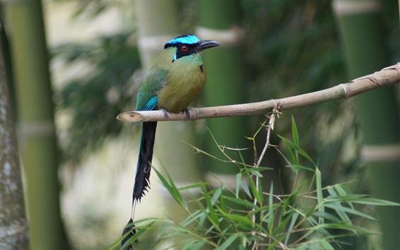 Papéis de Parede Kingfisher, ramo, bambu